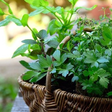 How To Keep Your Herbs Fresh